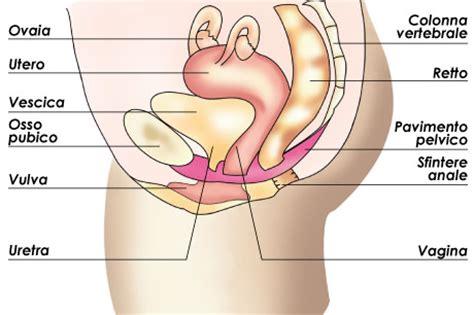 sintomi prolasso rettale interno il pavimento pelvico