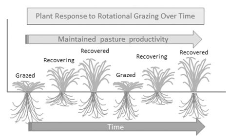 vegetation pattern formation in semi arid grazing systems pasture growth dynamics 183 the natural farmer