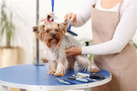 christmas gift ideas for dog groomer gifts for groomers