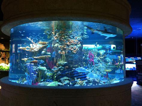 Home Design Store Miami Florida nation s largest aquarium store closes cflas