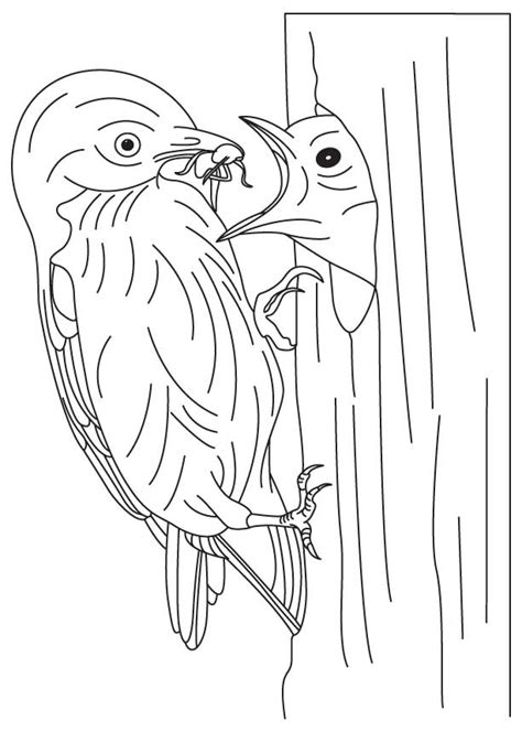 free coloring pages on bluebirds mountain bluebird coloring page blue bird pages 294387