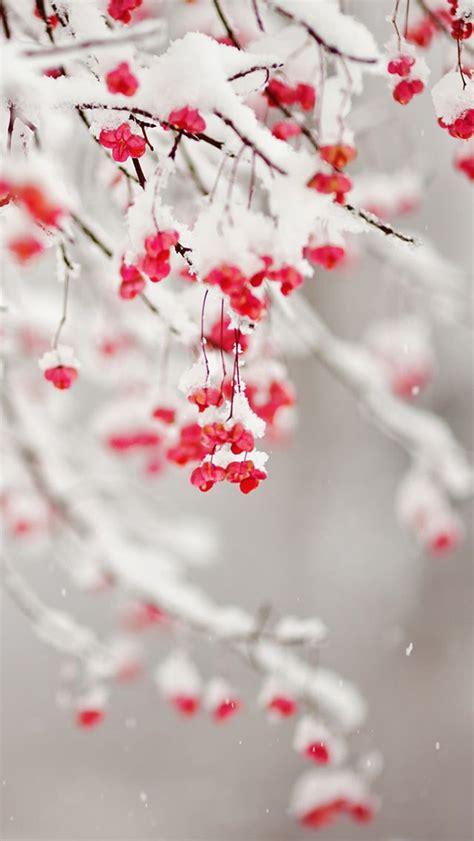 girly winter wallpaper winter fruit iphone wallpaper スマホ壁紙 iphone待受画像ギャラリー
