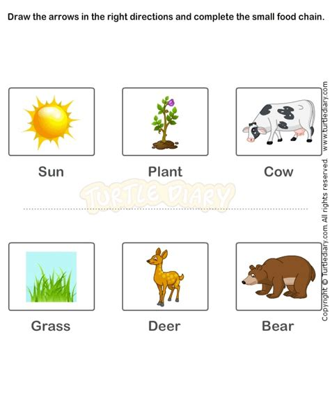 food webs on pinterest food chains science and food food chain worksheet 14 science worksheets grade 2