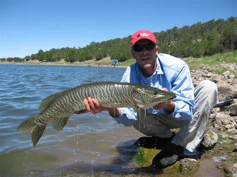 pa fish and game boat rs outdoors nm trophy tiger muskies in quemado bluewater