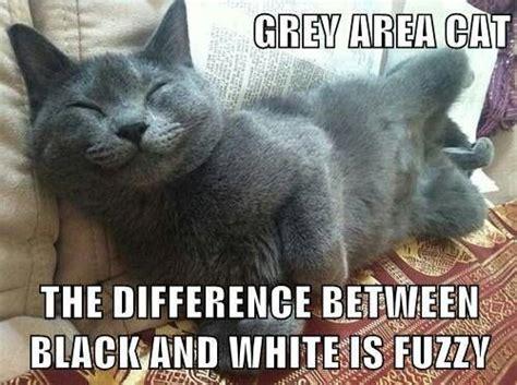 Russian Cat Meme - i love russian blue cats animal memes pinterest