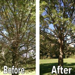 arbor experts tree services  heid ave dayton  phone number yelp