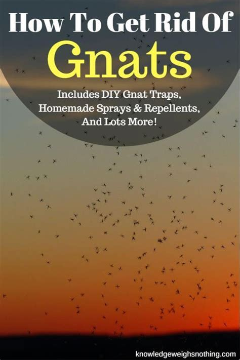 how to get rid of gnats in backyard 25 best ideas about gnat repellant on pinterest gnat