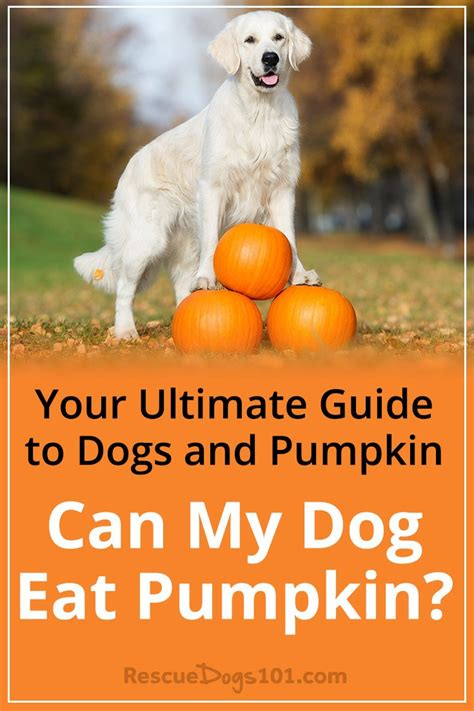 can dogs eat pumpkin seeds your ultimate guide to dogs and pumpkin can my eat pumpkin rescue dogs 101