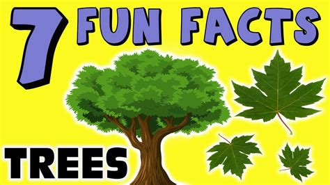 7 fun facts about trees facts for kids leaves redwoods