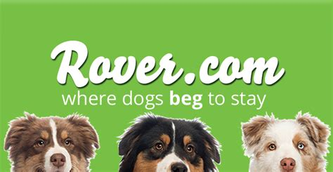 rover sitting reviews rover sitting review 25 promo code puppy smarts