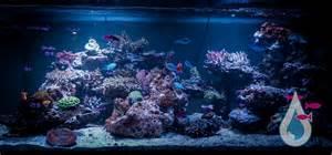 aquarium design new york manhattan aquariums