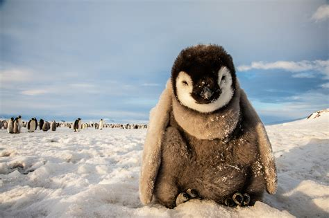national geographic creative what to expect on your trip to antarctica