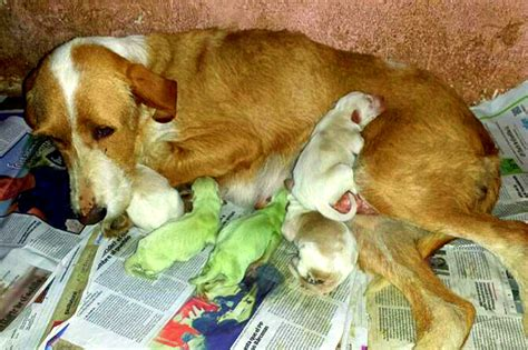 how for puppies to be born puppies in spain born with green fur
