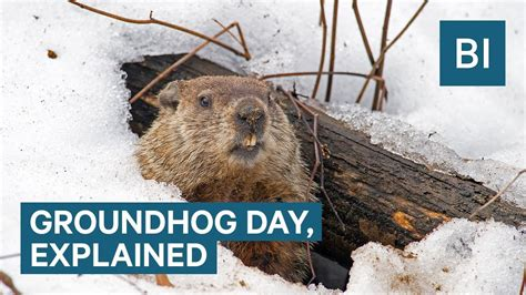 7 Reasons I Groundhog Day by Why Groundhogs Supposedly Predict The Weather On Groundhog
