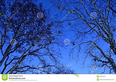 illuminazione alberi illuminazione per alberi una collezione di idee per idee