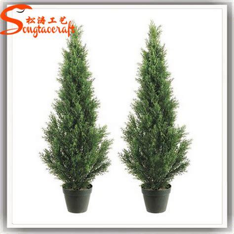decorative plants for home garden decorative plants for home talentneeds