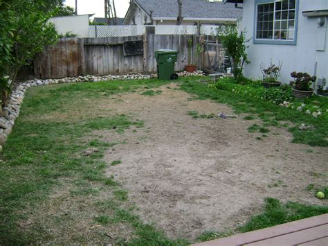 alternatives to grass in backyard 28 images lawn