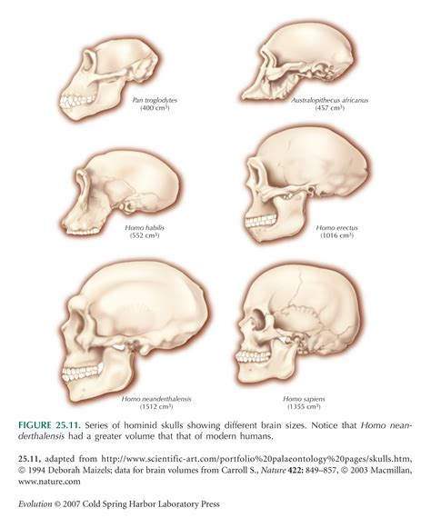 brain size evolution chapter 25 discussion questions