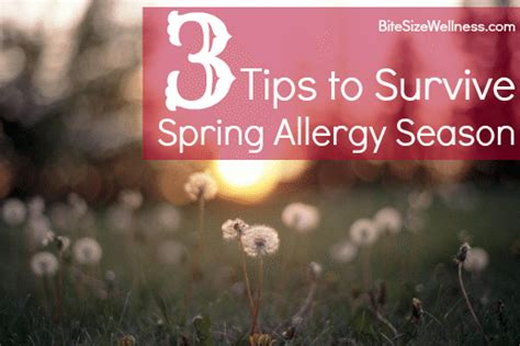 8 Tips For Surviving The Season by 3 Tips To Survive Allergy Season Dash Of Wellness