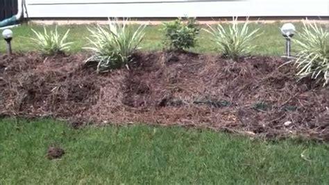 armadillo damage   garden youtube