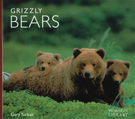 picture books about bears images books
