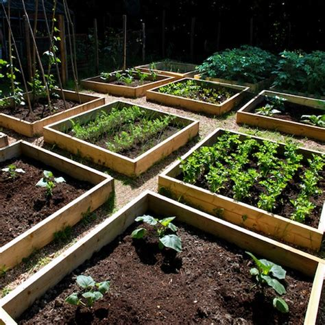 Container Gardening Growing Vegetables In Urban Planters Allotment Vegetable Gardening