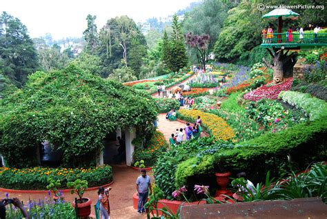 Ooty Flower Show 2017 Photos Botanical Garden Show