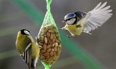 how feeding the birds could harm our best loved species