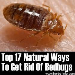 top 17 ways to get rid of bed bugs