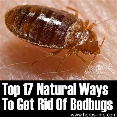 exterminate bed bugs top 17 natural ways to get rid of bed bugs