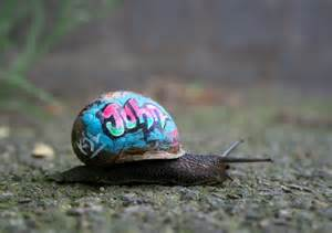 fed up with snails eat them