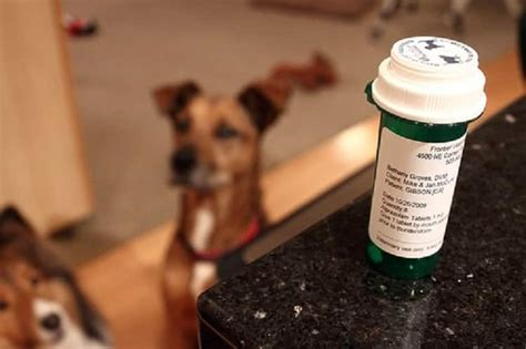 sedative for dogs how to sedate a conventional and sedatives