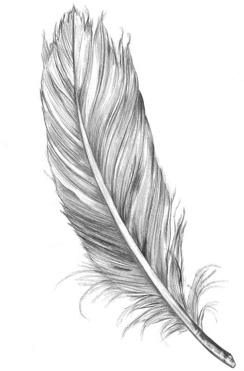 tattoo feather sketch sophie clouston feather