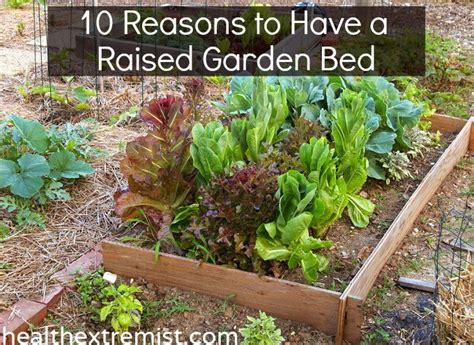 benefits of raised bed gardening 10 benefits of raised garden beds and how to make one