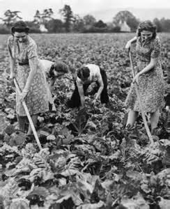 dig for victory vegetable growing during wwii in pics