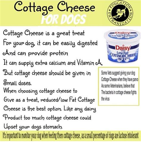 dogs cottage cheese 17 best images about pets on plain yogurt your and pets