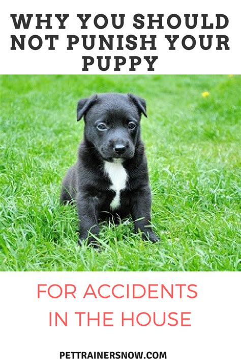dog accidents in the house why isn t punishment an effective training method pettrainersnow