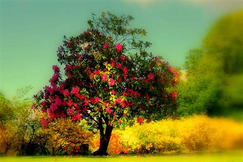 beautiful trees beautiful tree google pretraga we heart it