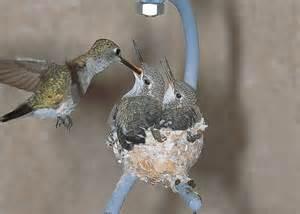 duncraft hummingbird house