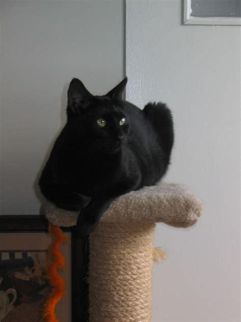 Dust Cat best litter for dust and odor kitten feline smelling cats city data forum