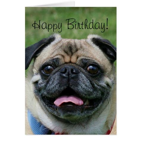 happy birthday pug card happy birthday pug greeting card zazzle