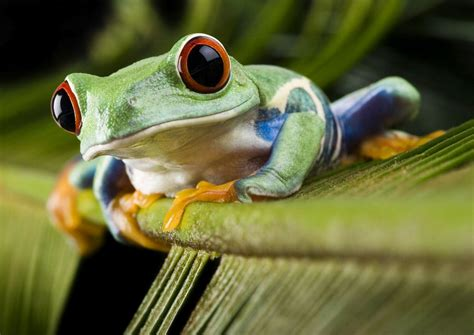imagenes de ranitas verdes june 2012 june 2012 banco de imagenes gratuitas