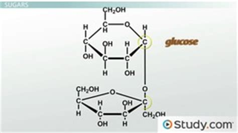 chapter 6 carbohydrates study guide answers introduction to organic molecules ii monomers and