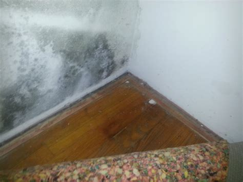 black mold in houses finding mold testing