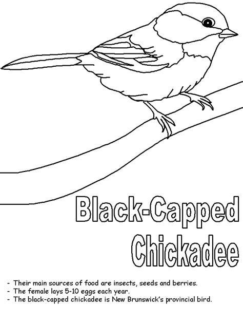 Chickadee Bird Coloring Page | black capped chickadee coloring page