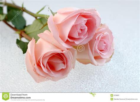 imagenes tres rosas tres rosas rosadas fotos de archivo imagen 878883