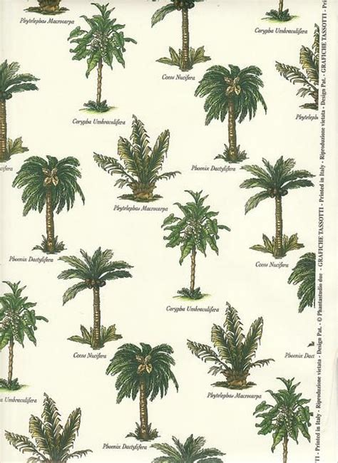 botanical trees tree types 1 landscaping pinterest 1000 images about plant and palm tree ideas for