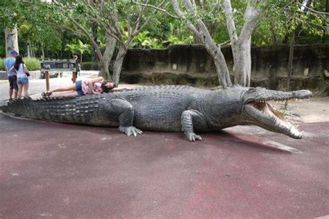 Deinosuchus - Dinopedia - the free dinosaur encyclopedia Giant Alligator Dinosaur