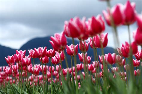 primavera fiori plantas y flores que anuncian la primavera sgaravatti eu