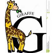 Jirafa Animal Del Alfabeto Imagenes De Archivo  Imagen